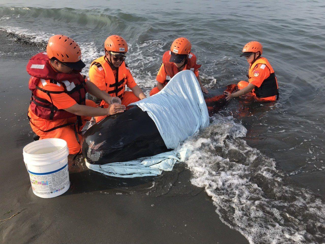 今天清晨,熱心居民發現一隻鯨豚受傷擱淺二仁溪沙灘,第一時間先打電話向高市消防局報...