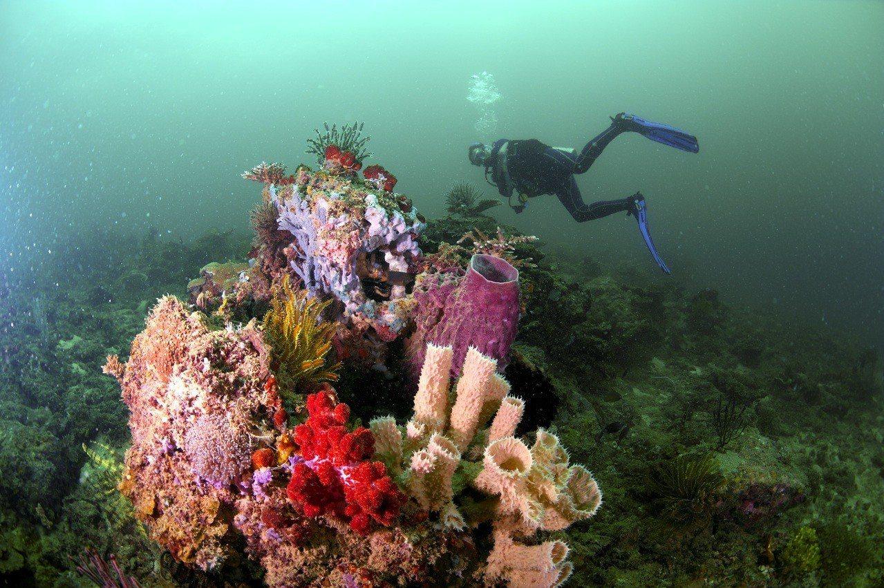 東姑阿都拉曼國家公園繽紛的海底珊瑚世界。圖/馬來西亞觀光局提供