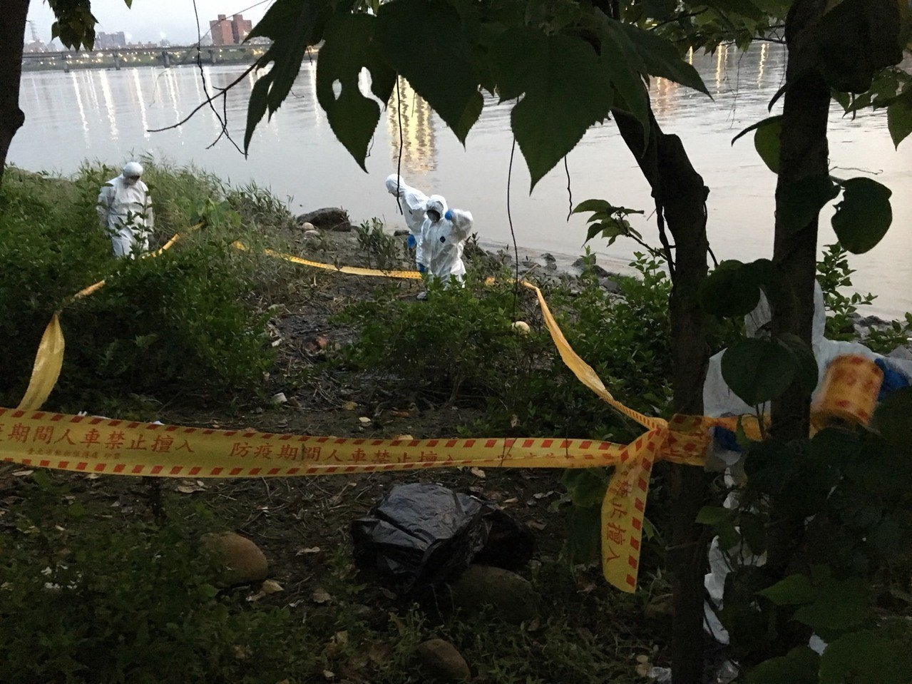 北市動保處傍晚接獲通報,在延平河濱公園淡水河畔發現1隻豬屍體,隨後拉起封鎖線消毒...