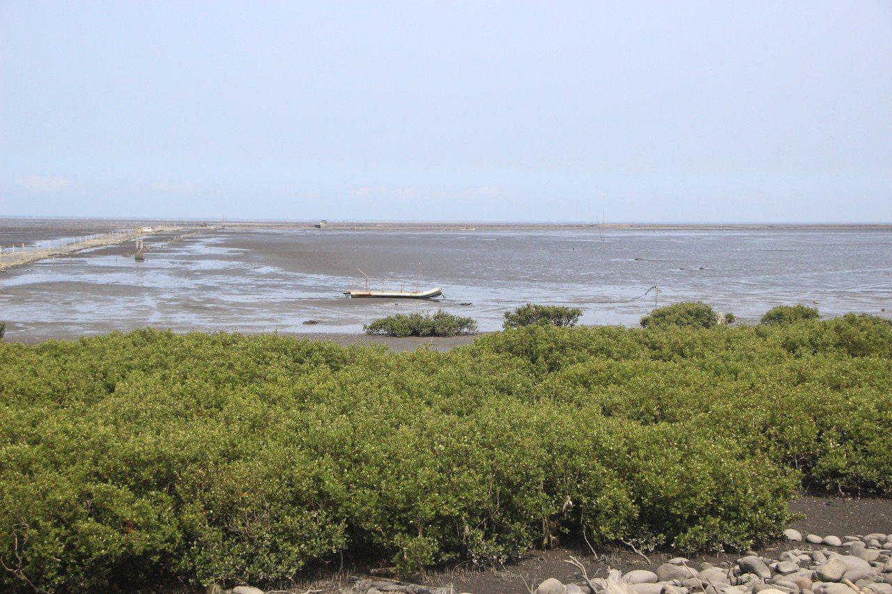 彰化漢寶濕地生態資源豐富,被視為國際級濕地。記者林敬家/攝影