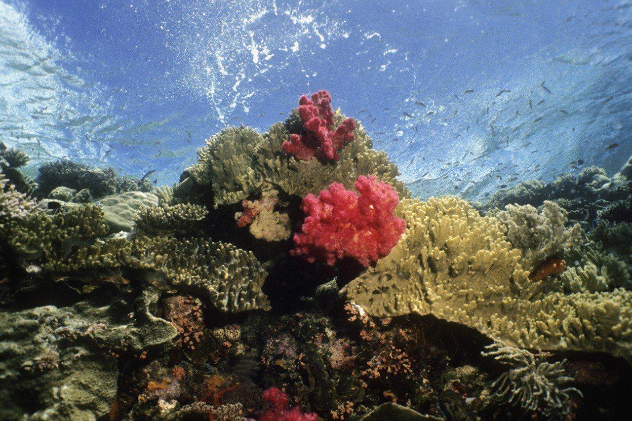 帛琉擁有豐富海洋資源。圖/ingimage