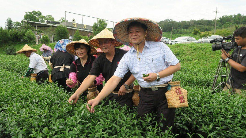 總幹事戴鎮東(前1)參與採茶活動 台東縣農會提供