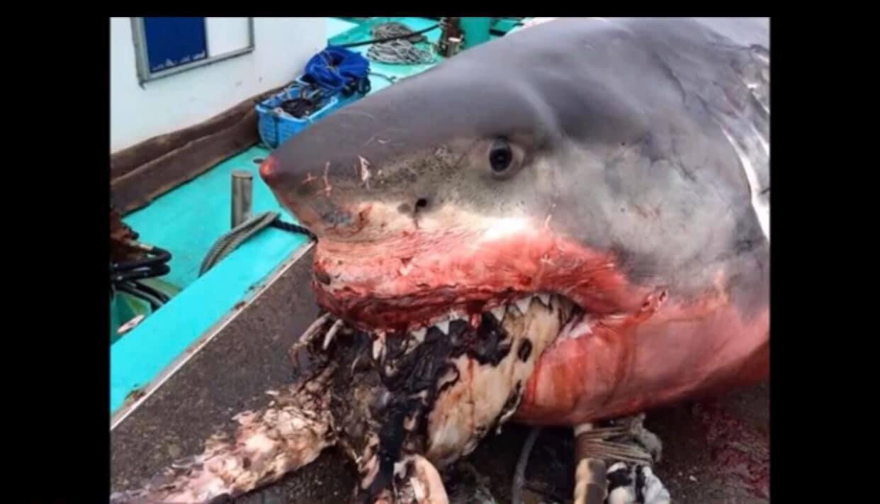 1位名叫維拉(Greg Vella)的漁夫19日在臉書社團上發布照片,顯示這巨型...