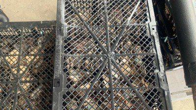 高雄岡山某水產行涉嫌違反食安法,將尚未檢驗的174公斤活鮑運往桃園市大園不知名倉...