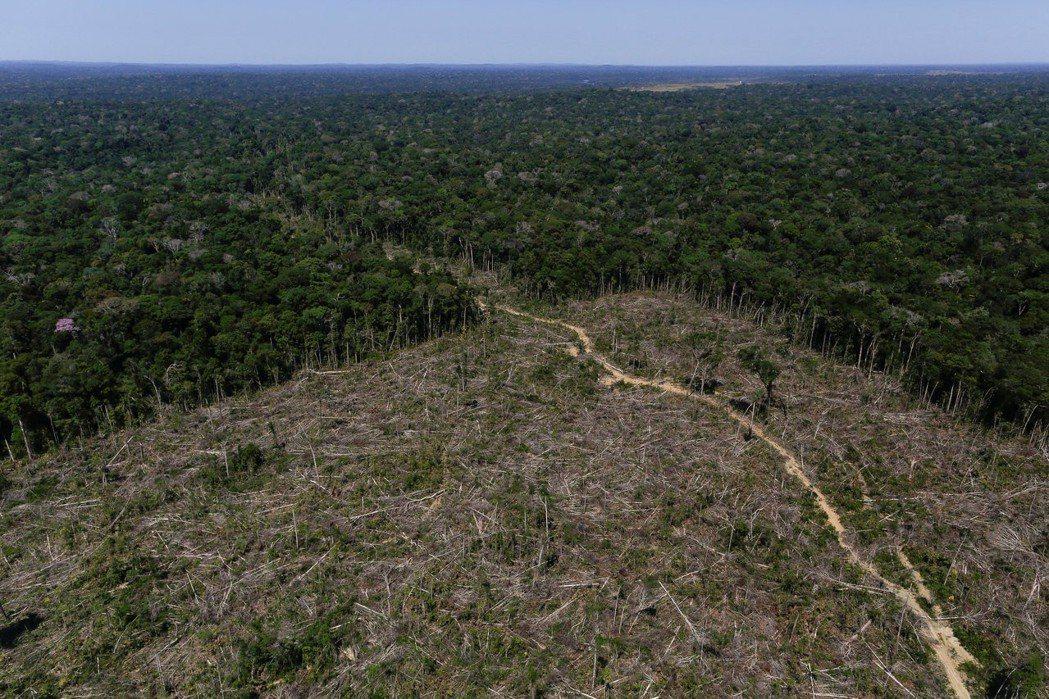 巴西亞馬遜森林遭濫伐的情況嚴重。路透