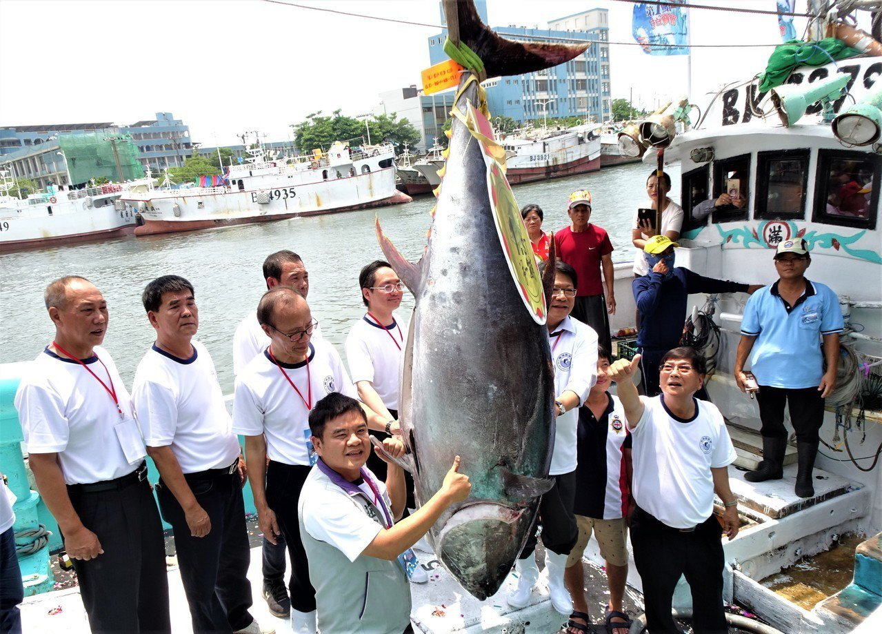 屏東黑鮪魚文化觀光季重頭戲的「第一鮪」今年邁入第18年,海洋保育人士抨擊活動間接...