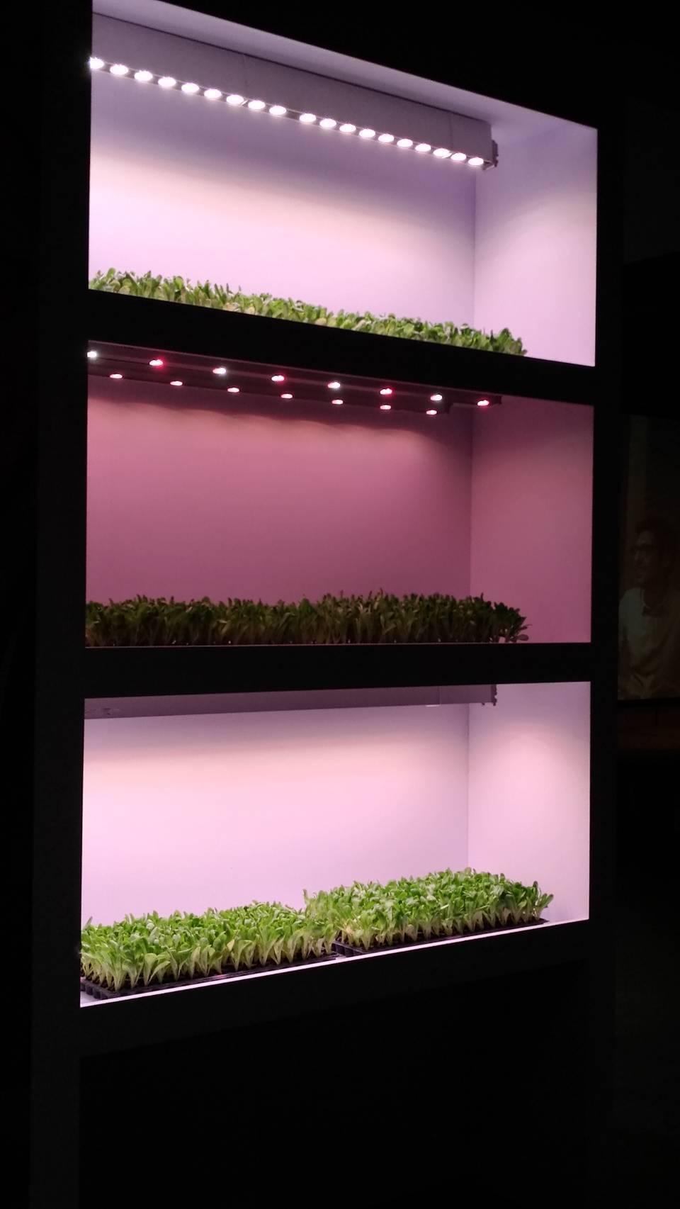 全球照明龍頭大廠的昕諾飛表示,植物照明為種植者量身訂做光配方。記者張義宮/攝影