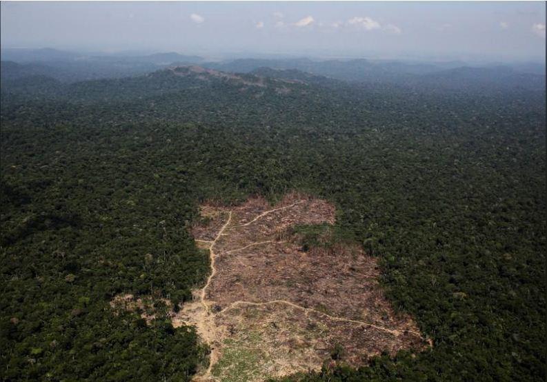 遭砍伐的巴西熱帶雨林。路透。