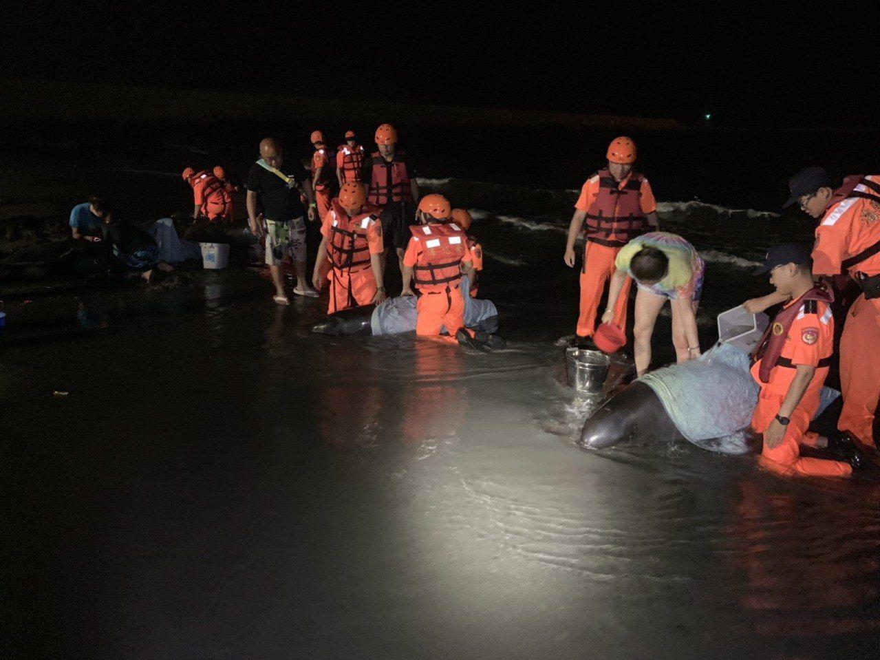 5隻小虎鯨擱淺,海巡人員和志工搶救。記者林保光/翻攝
