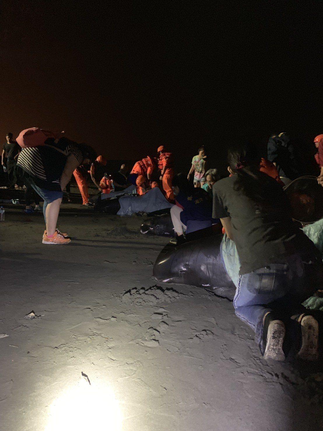 海巡人員搶救擱淺虎鯨。記者林保光/翻攝