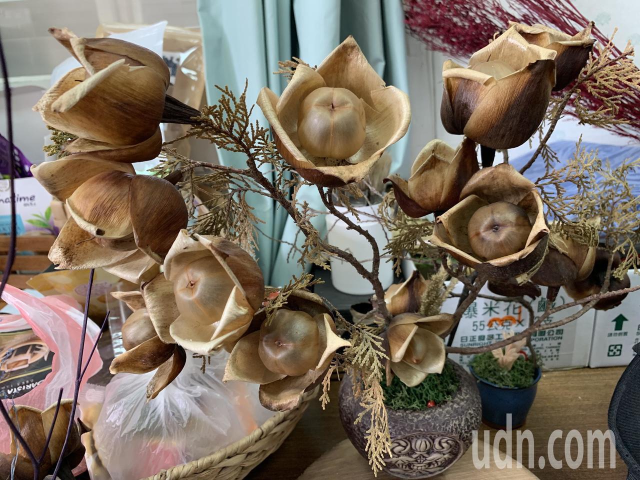 木玫瑰不是花,是蒴果自然乾燥後,形成花的形狀。記者吳淑玲/攝影