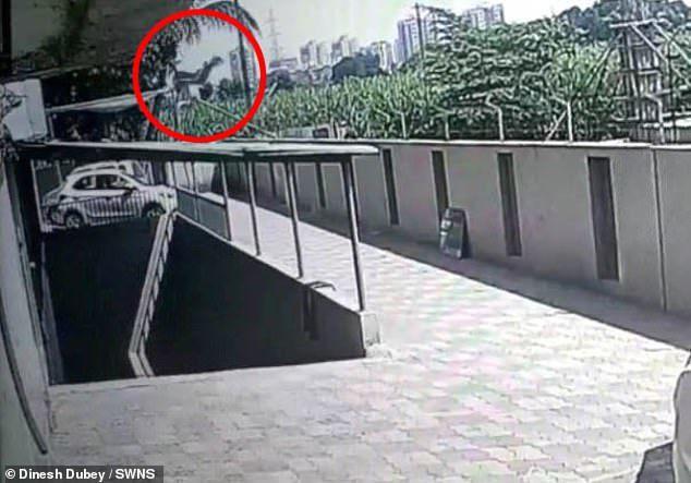 印度一名少女從12樓高的公寓失足墜樓,意外落在一樓的遮棚,雖身受重傷但保住了一條...