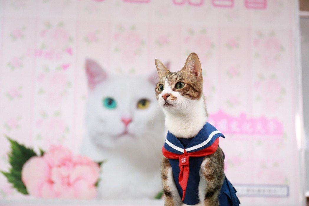 養貓人數成長,大學也開課滿足貓奴的需求。 圖/文化大學推廣部提供