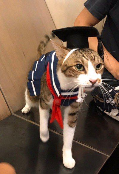 文化大學推廣部舉辦「貓之大學日」,說明越來越多貓主子假日進修學養貓的現象。 圖/...