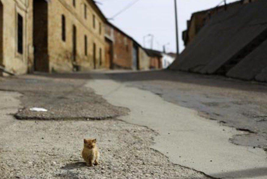 西班牙西北部下佩萊阿斯的街道上空無一人,只有一隻貓。路透