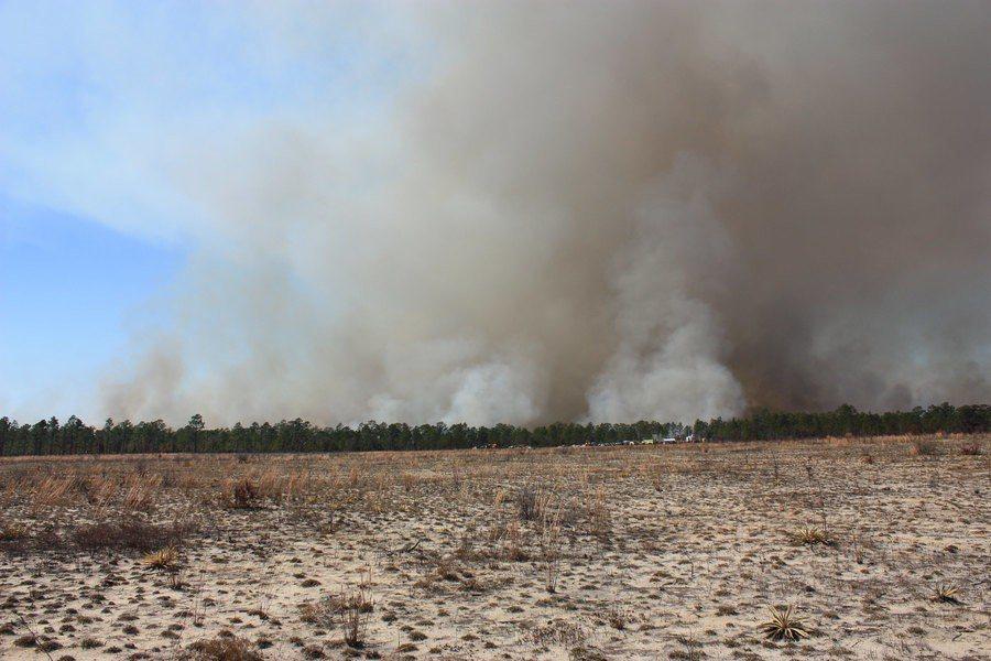去年人類毀掉地球上的森林資源相當可觀。 台灣醒報(擷自Flicker)