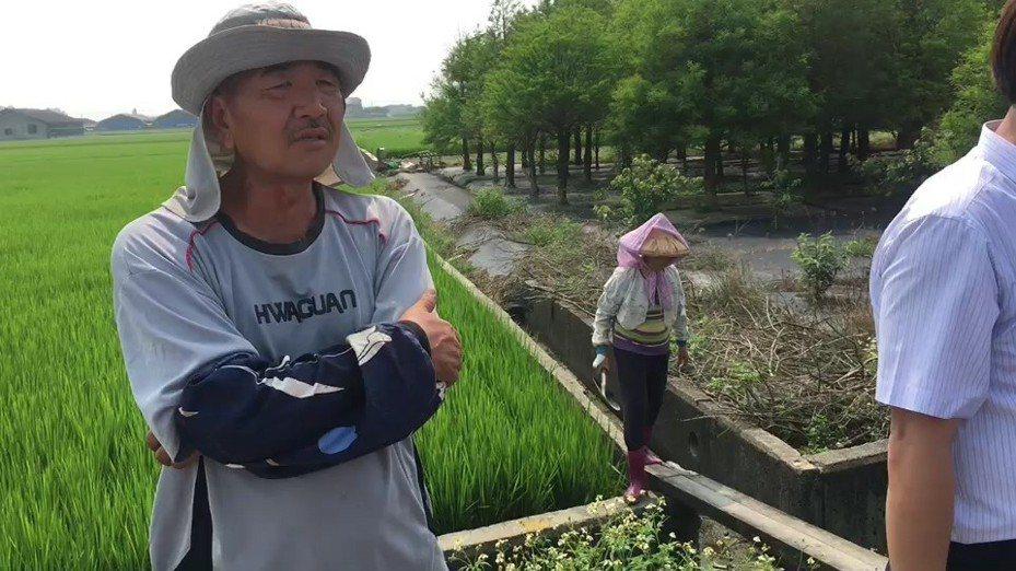 農民在未被告知下,包商把挖土機開進農田,致即將收成的稻作被壓死,農民痛心。記者蔡維斌/攝影