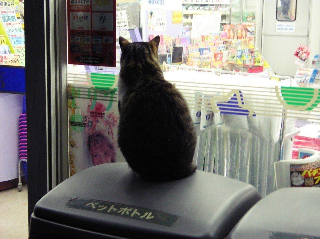 「一定得拚了命的開店,才算是『日本超商』嗎?」圖為一隻在超商門外深夜冶遊的野貓。...