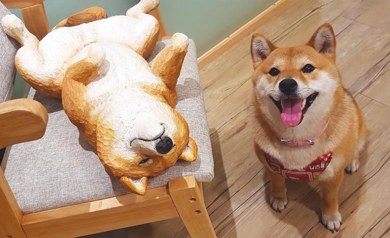 圖/兩隻柴犬的可愛合照,木雕柴犬十分精緻。網友屁柴Toro授權