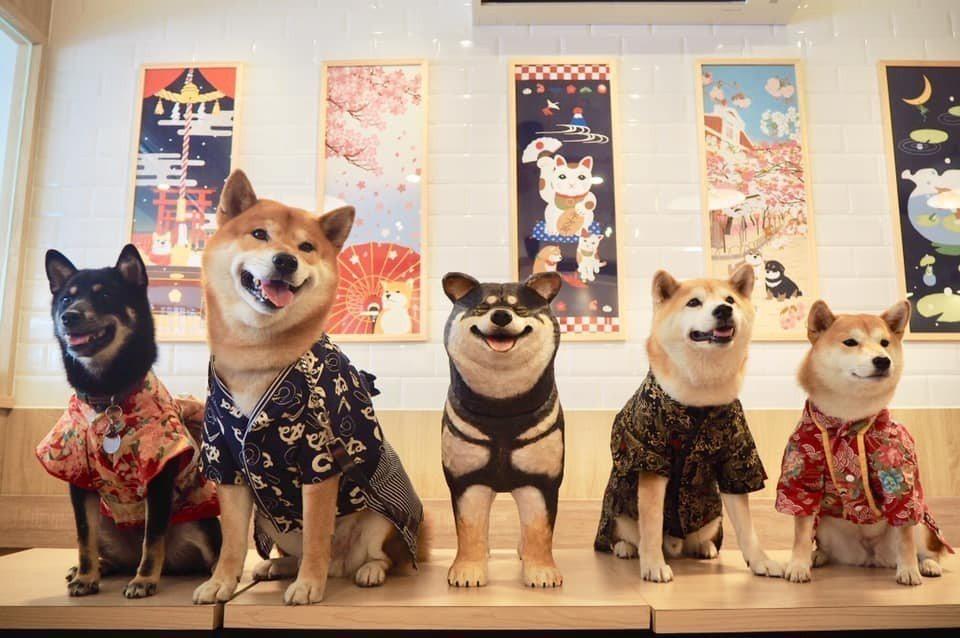圖/柴犬聚會。網友比比的秘密花園授權
