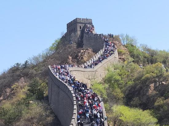五一小長假第一天,八達嶺長城迎來5.4萬多遊客「打卡」。(北京青年報)