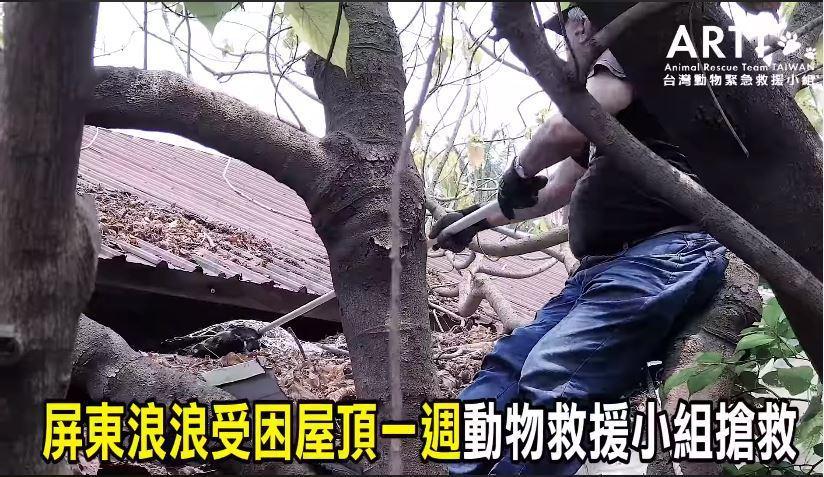救援小組日前接獲民眾通報,在屏東縣佳冬鄉發現一隻流浪犬,受困在廢棄的老舊宿舍屋頂...