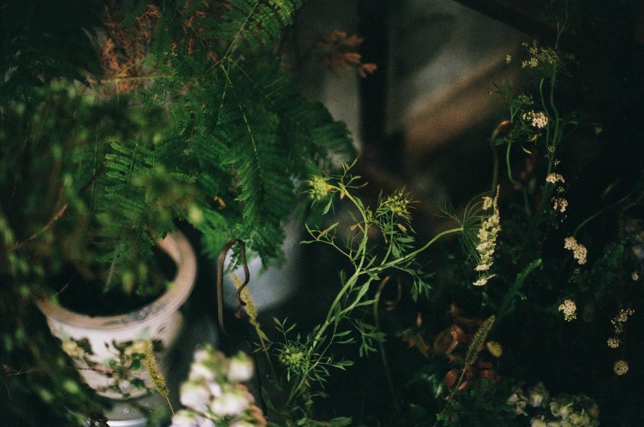 「草木」店內外充滿綠意。圖/草木 提供