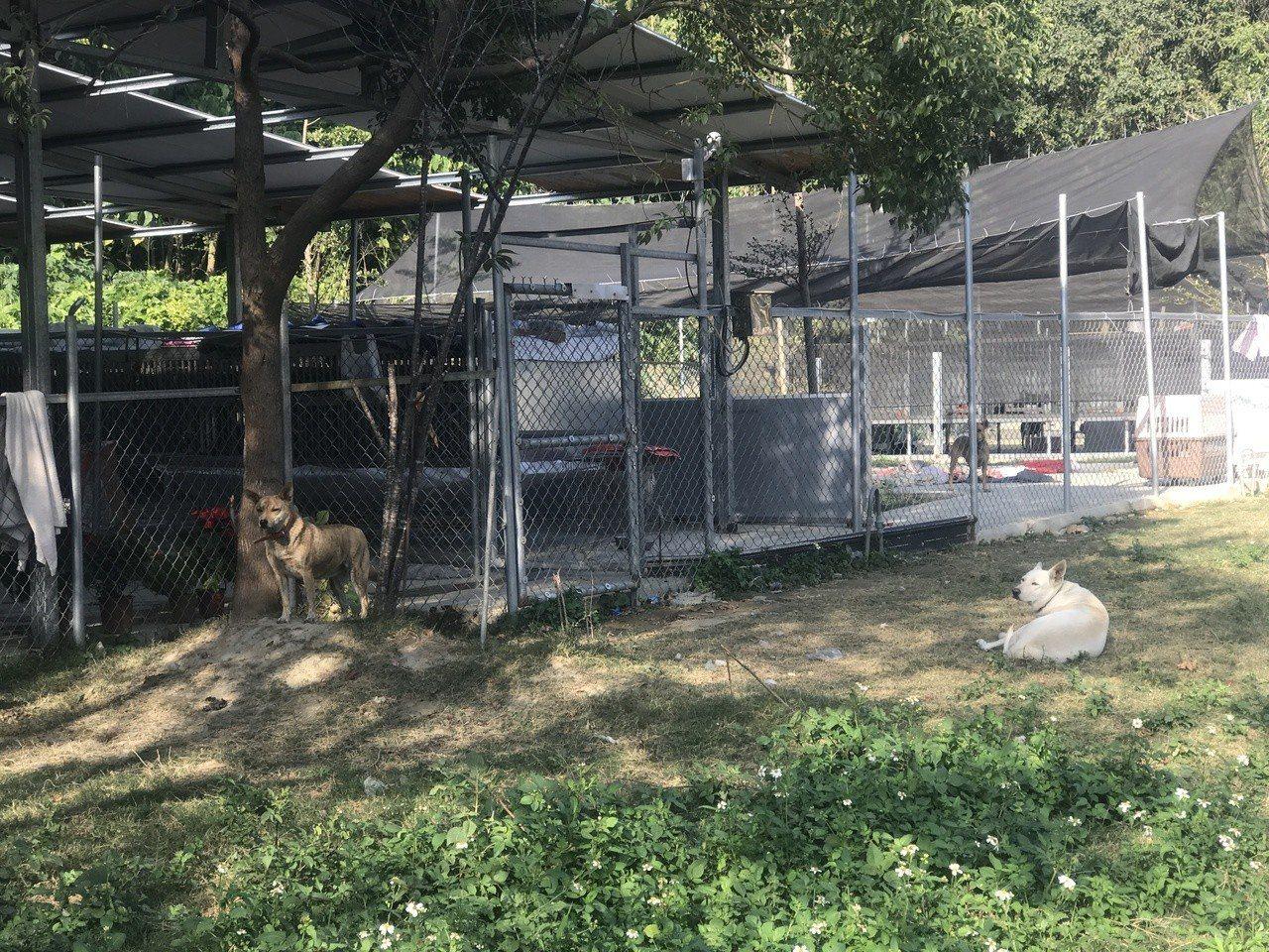 彰化流浪狗為患,有善心人士提供私人土地收容流浪狗。記者林宛諭/攝影