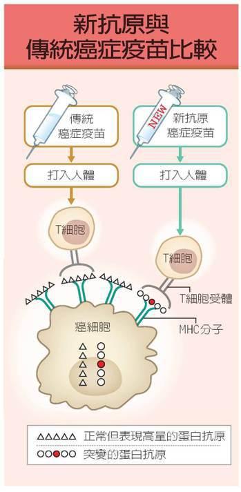 新抗原與傳統癌症疫苗比較 繪圖/假面超人工作室