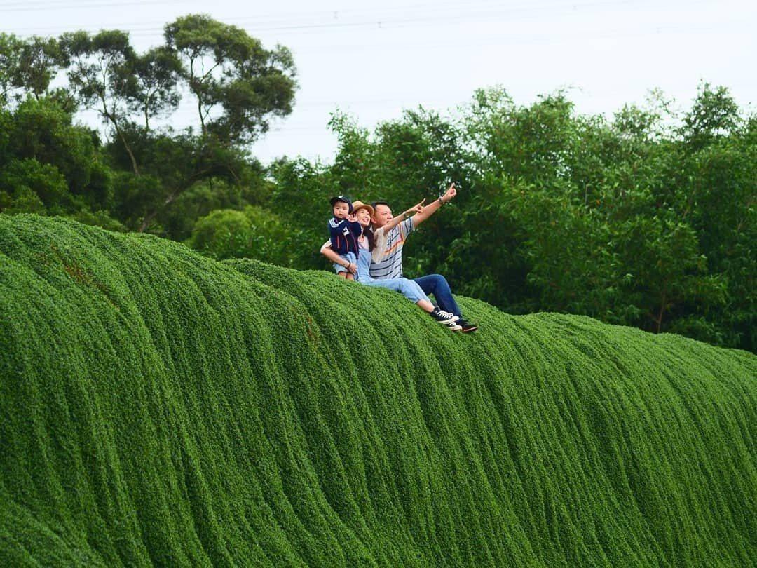 圖/在綠色瀑布上拍攝全家福。網友3qweiwei授權