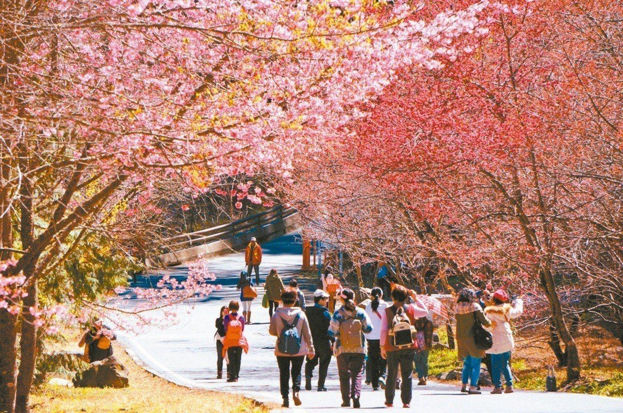 春遊補助比暖冬冷清,有七成旅行社業者根本不想參加。 圖/聯合報系資料照片