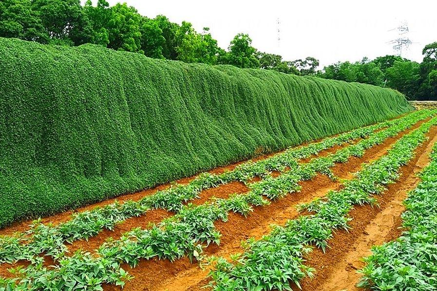 [新聞] 綠色瀑布不再開放!農作物遭踩踏破壞 地主插牌公告:私…