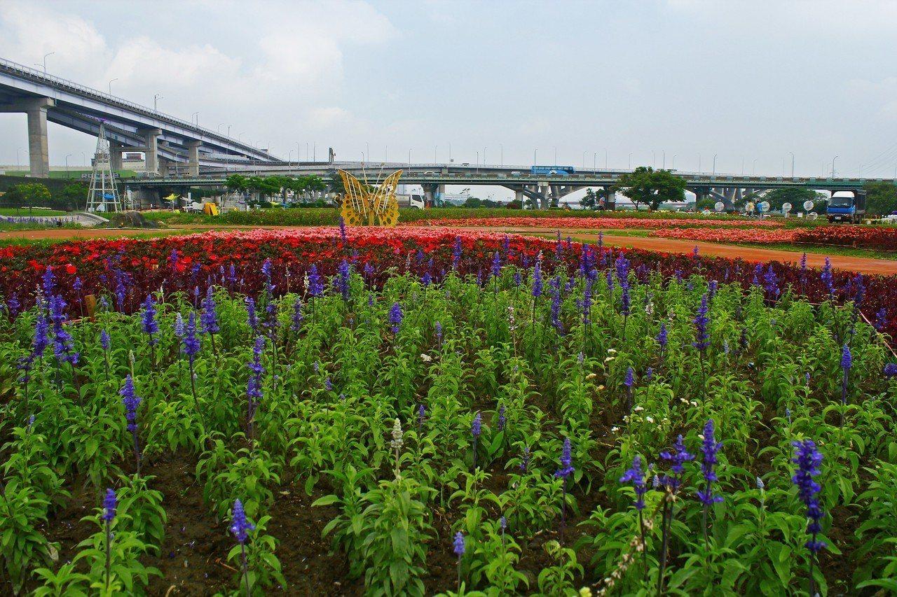 新北市政府高灘地工程管理處在板橋江翠蝴蝶地景公園,以花草和夜間LED燈,打造大面...