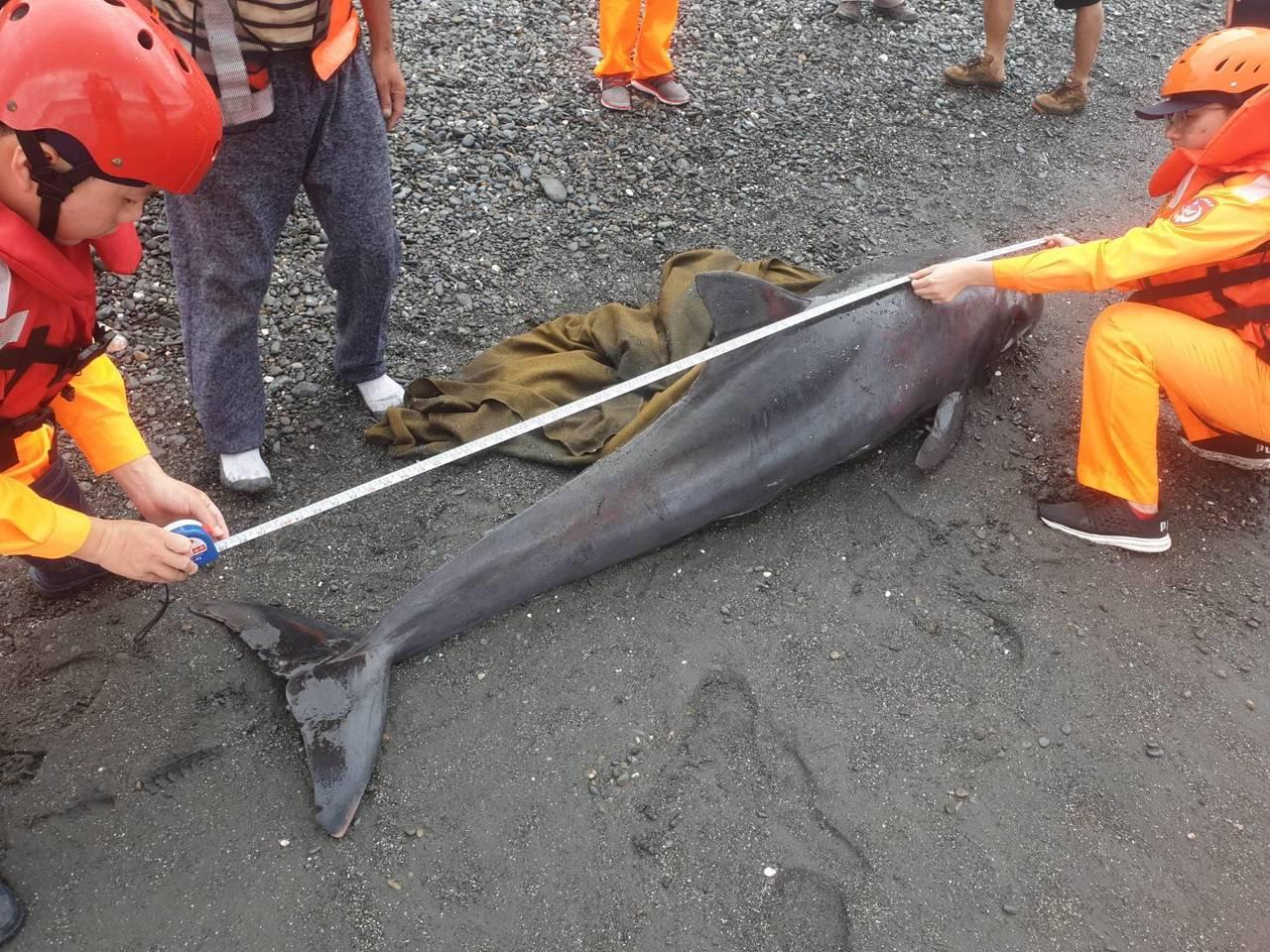 今年4月17日台東縣台9線426K岸際,被人發現1隻小虎鯨擱淺,雖經海巡署東部分...