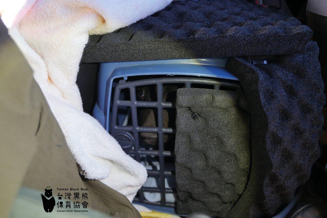 去年8月小熊僅5公斤,使用塑膠運輸籠運送,外覆隔音泡棉,並由鋼瓶供應氧氣。圖/取...