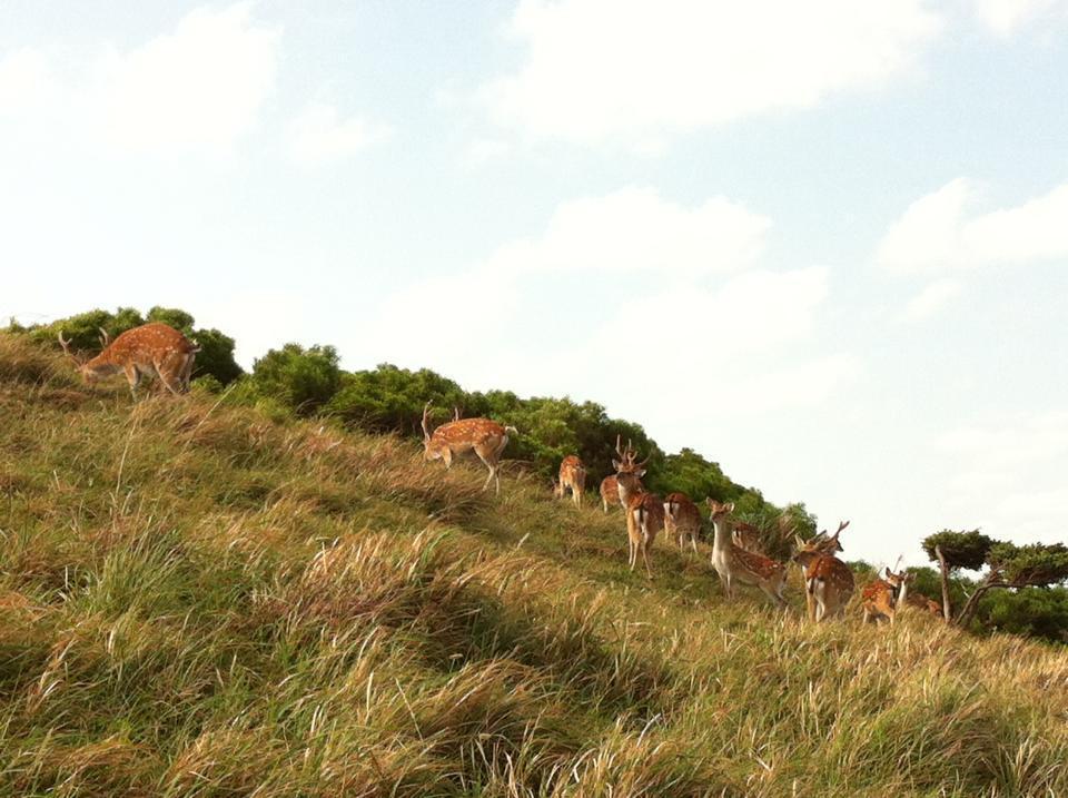 圖/山坡上的梅花鹿群。擷取自馬祖國家風景區