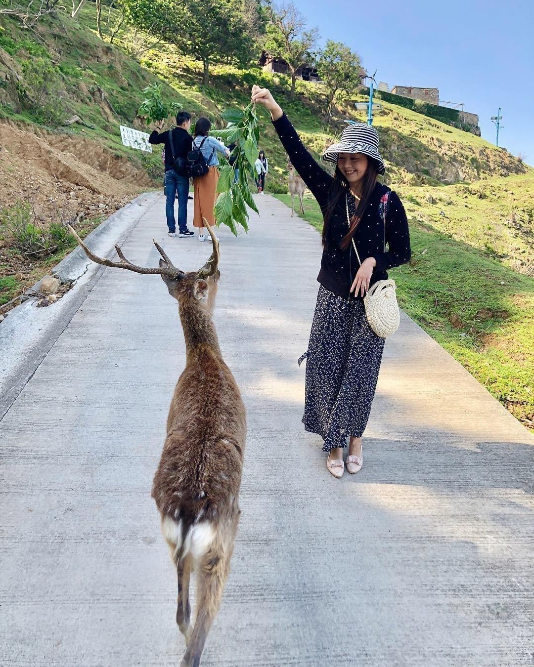圖/民眾餵食小鹿。網友show09765授權