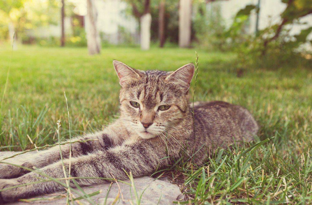 貓式如果真的學不來,去看一下家裡養的貓。圖/ingimage