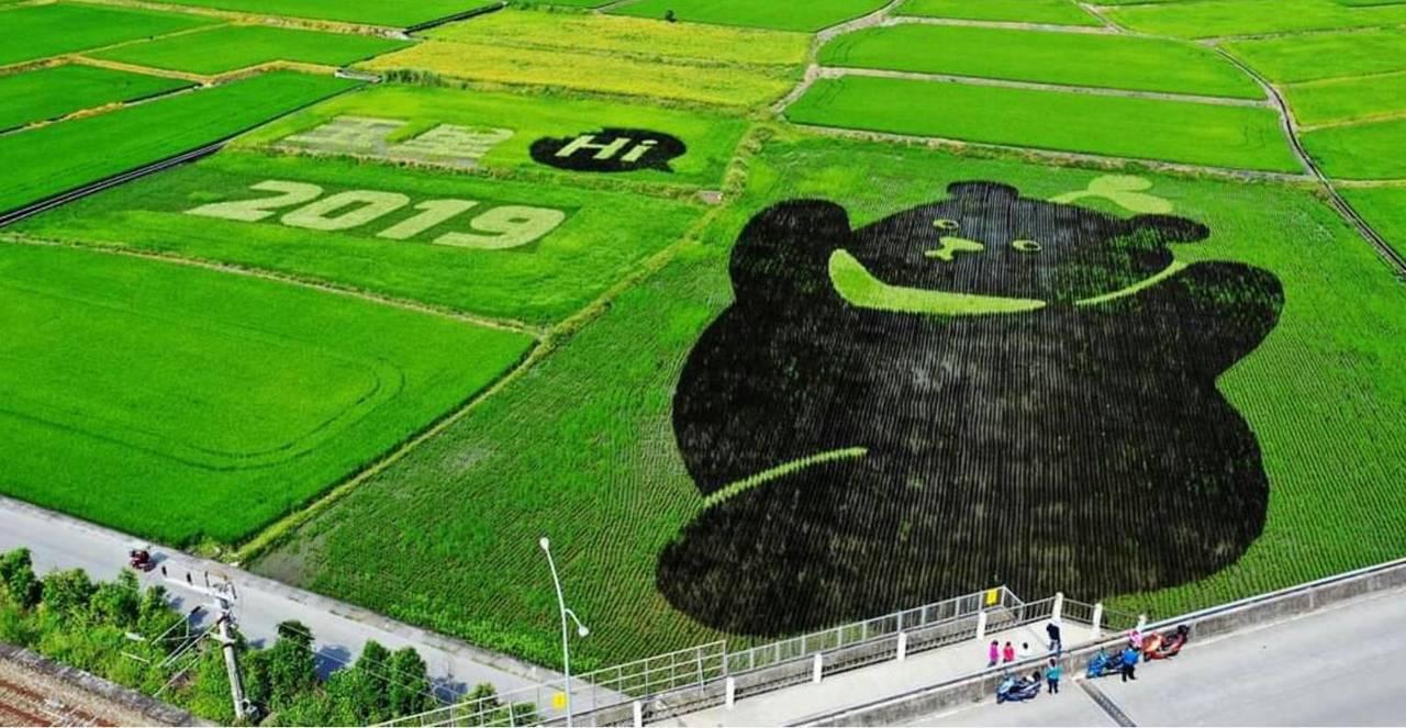 台灣黑熊保育協會與花蓮農夫網紅小劍劍合作,種出可愛黑熊稻田。圖/黑熊保育協會提供