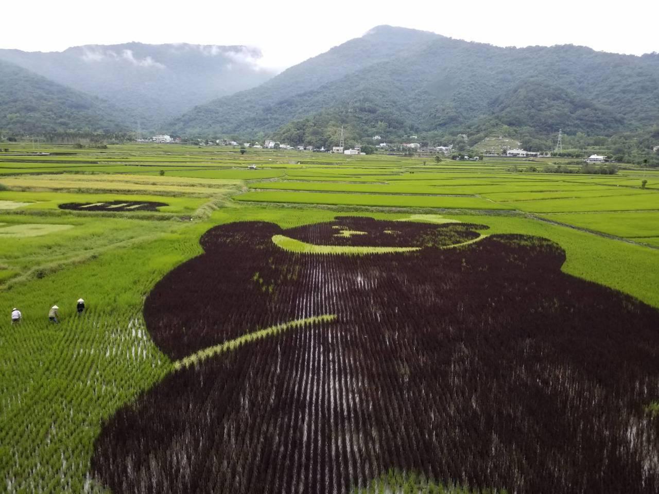 黑熊彩繪稻米一旁就是中央山脈,也是台灣黑熊的家,提醒大家對環境要更友善。圖/黑熊...