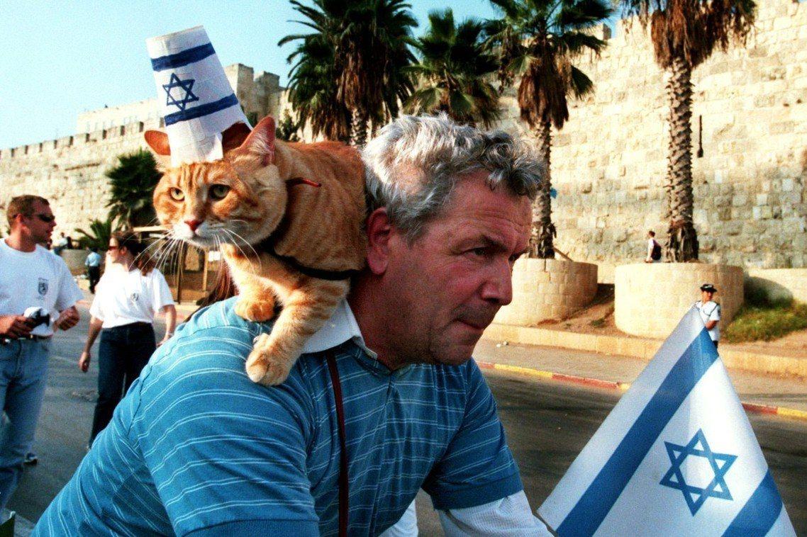 耶路撒冷的「人貓共存」問題,正日漸嚴重對立起來。 圖/路透社