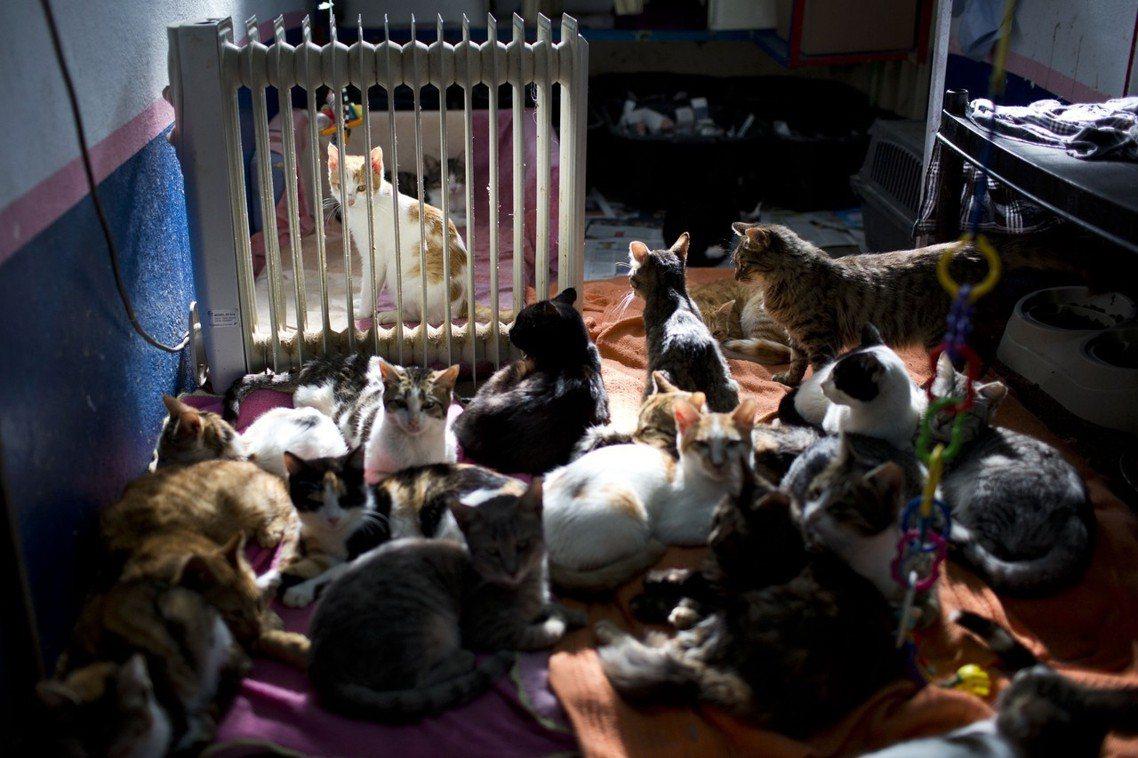 貓山貓海。耶城市內目前約有90萬人口,但卻有24萬隻野貓,平均每平方公里就有2,...