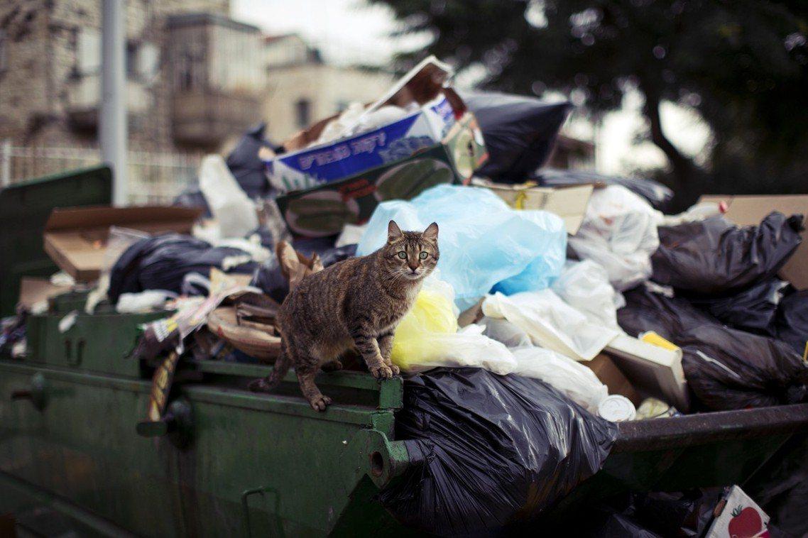 各種棄養、流浪貓繁衍,結合了都市垃圾處理困境,是讓浪貓數量失控的主因之一。 圖/...