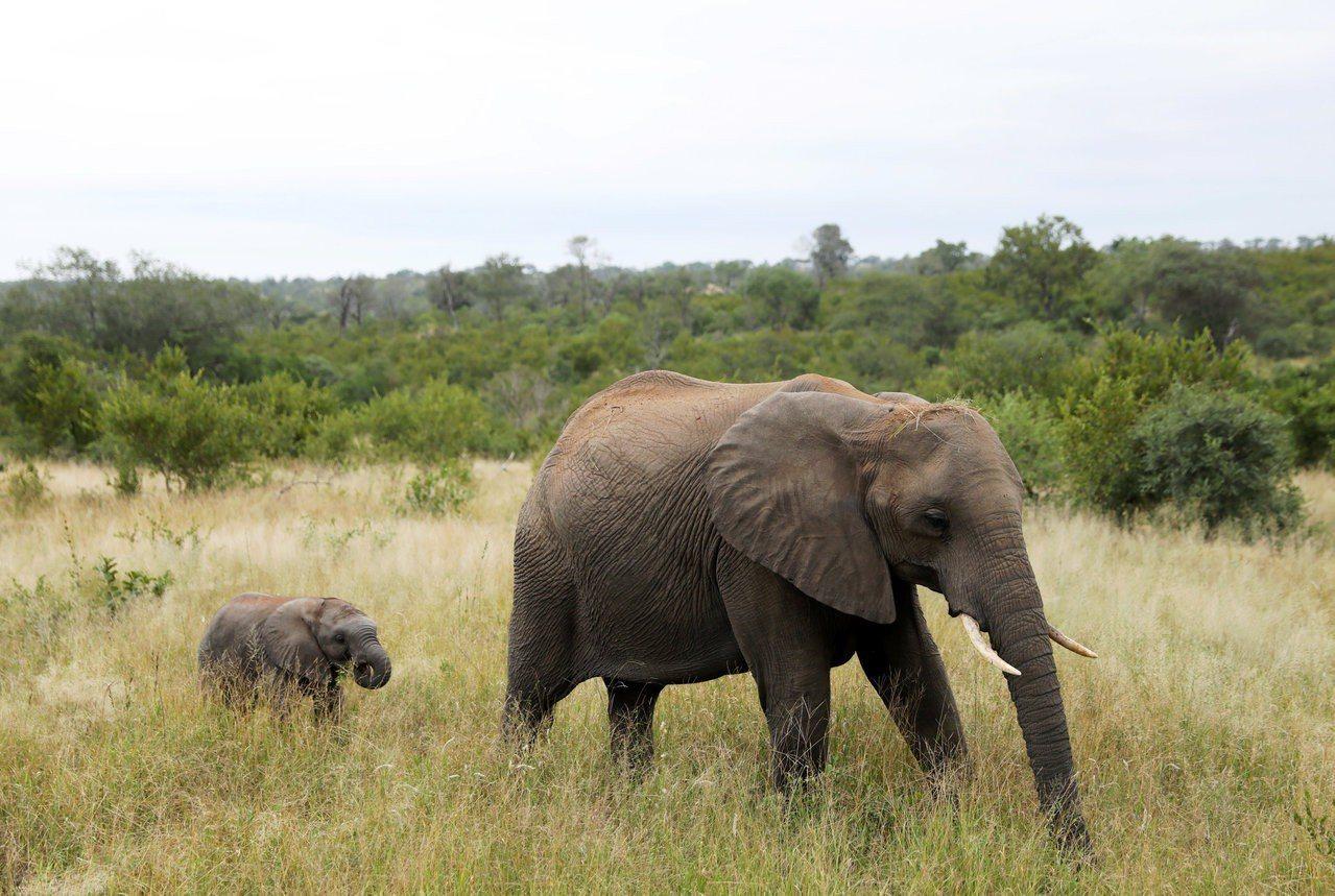 本大象與文中大象無關,示意圖。路透