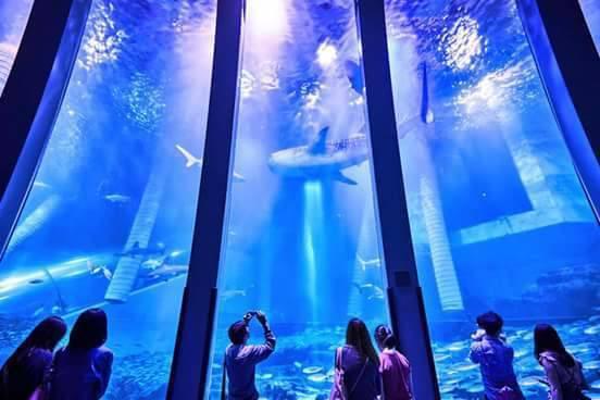 華泰名品城八景島水族館預計今年農曆年前開幕。圖/摘自八景島水族館臉書