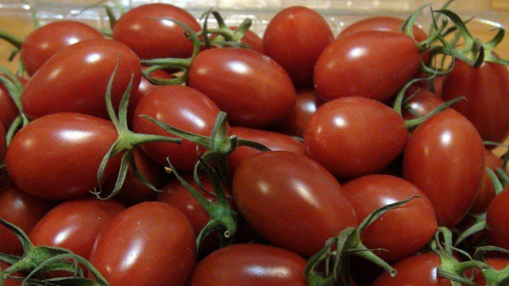 番茄。本報資料照片