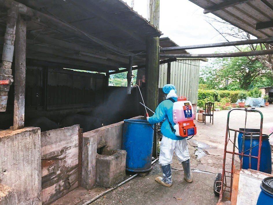 防疫人員對豬隻抽血送驗,也為養豬場消毒,實施移動管制。 圖/動保處提供