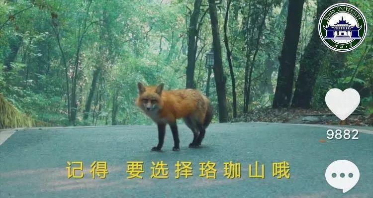 武漢大學今年製作一個35秒的抖音視頻,以學校寶貝紅狐狸─珞珞對外招生。圖/摘自武...