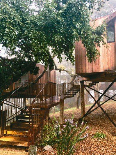 「高蹺樹屋」並非蓋在樹上,而是隱身樹林間,與大自然完美融合。 圖/游慧君、陳志光