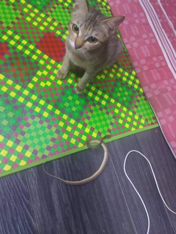 圖片來源/FB「Kami Pecinta Kucing」